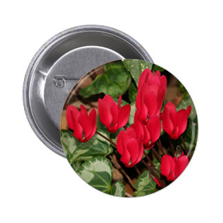 Red Cyclamen flowers in bloom Pin