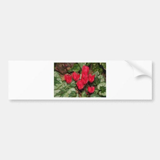 Red Cyclamen flowers in bloom Bumper Stickers
