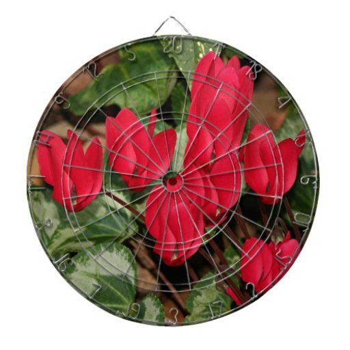 Red Cyclamen flowers in bloom Dart Board