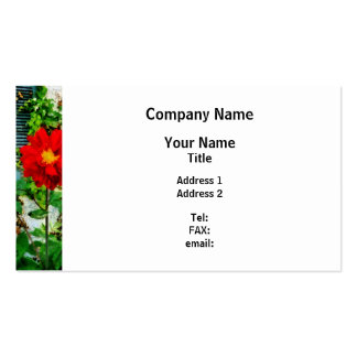Red Dahlia By Window Pack Of Standard Business Cards