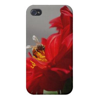 Red Dahlia iPhone 4/4S Cases