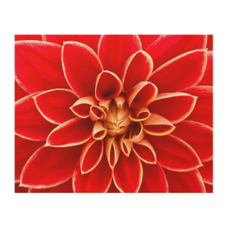 Red Dahlia Wood Canvases