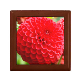 Red Dahlias in the Summer Gift Box