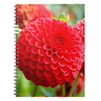 Red Dahlias in the Summer Spiral Notebook
