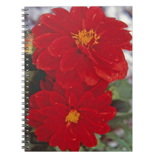 Red Dahlias Notebook