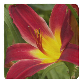 Red Daylily Floral Stone Trivet