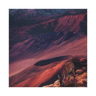 Red Deer Canvas Print