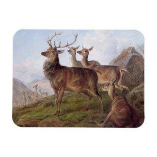 Red Deer in a Highland Landscape, 1872 (oil on can Rectangular Photo Magnet