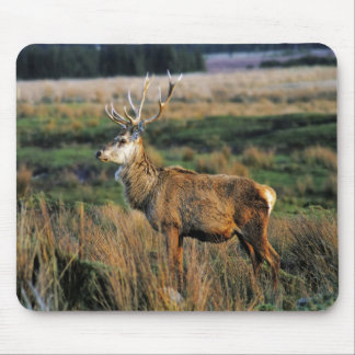 Red Deer Mousepad