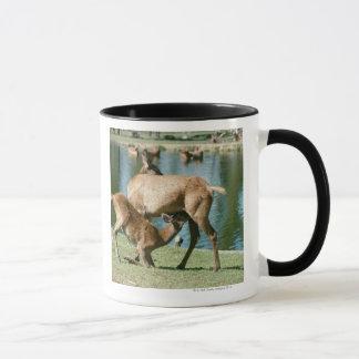 Red deer nursing offspring mug