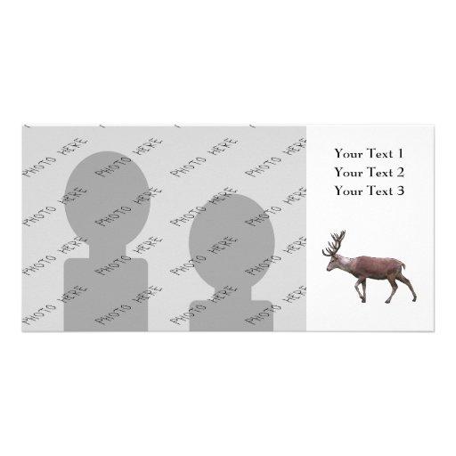 Red Deer. Custom Photo Card