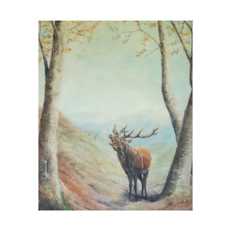 Red deer stag bellowing in a highland glen. canvas print