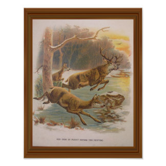 Red Deer Vintage Illustration 19th Century Artwork Poster