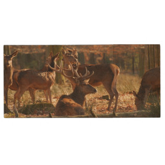Red Deers In The Autumnal Wood Wood USB 2.0 Flash Drive
