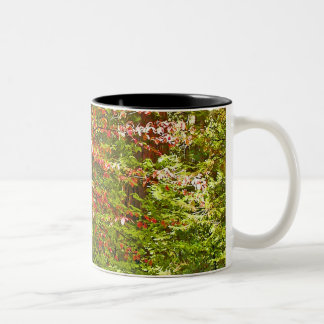 Red Dogwood Two-Tone Coffee Mug