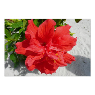 Red Double Hibiscus Flower
