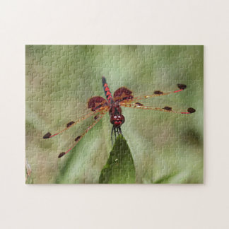 Red Dragonfly Jigsaw Puzzle