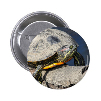 Red-eared Slider Pin