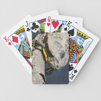 Red-eared Slider Bicycle Poker Deck