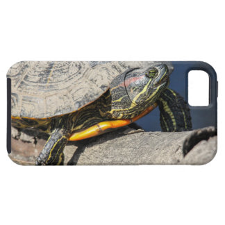 Red-eared Slider iPhone 5 Case