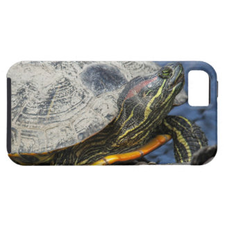 Red-eared Slider iPhone 5 Covers