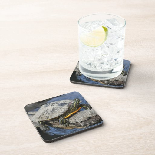 Red-eared Slider Coasters