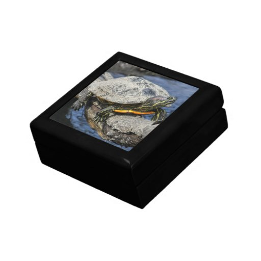 Red-eared Slider Gift Boxes