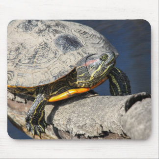 Red-eared Slider Mouse Pads