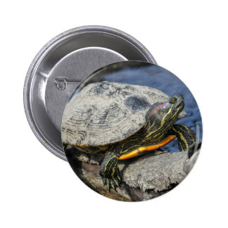 Red-eared Slider Pinback Button