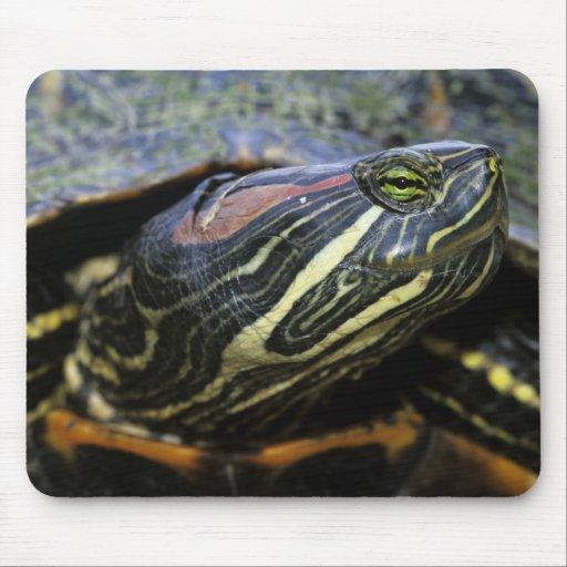 Red-eared Slider, Trachemys scripta elegans, 2 Mouse Pad
