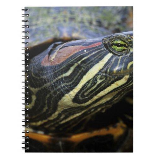 Red-eared Slider, Trachemys scripta elegans, 2 Spiral Note Book