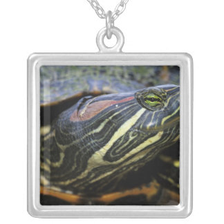 Red-eared Slider, Trachemys scripta elegans, 2 Silver Plated Necklace