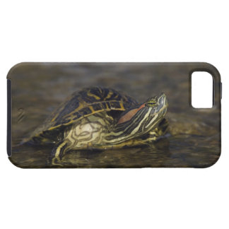 Red-eared Slider, Trachemys scripta elegans, iPhone 5 Covers