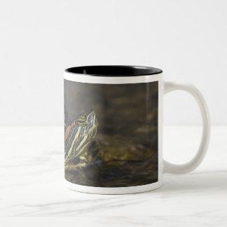 Red-eared Slider, Trachemys scripta elegans, Mug