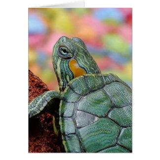 Red-eared slider turtle greeting card