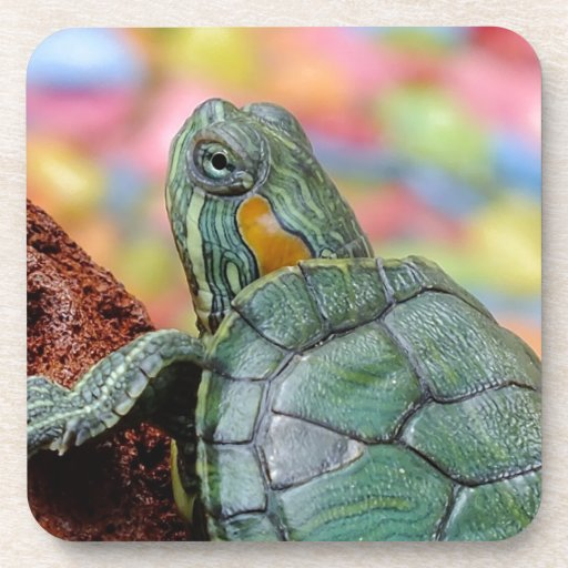 Red-eared slider turtle coasters