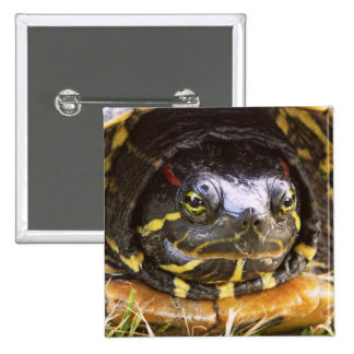 Red Eared Slider Turtle Head Pinback Buttons
