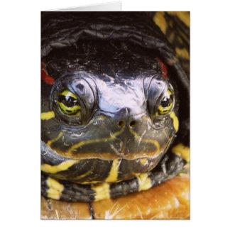 Red Eared Slider Turtle Head Card