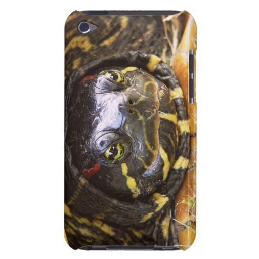 Red Eared Slider Turtle Head iPod Touch Cases