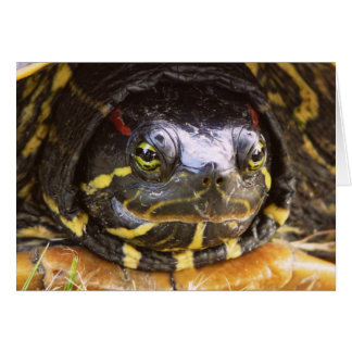 Red Eared Slider Turtle Head Greeting Card