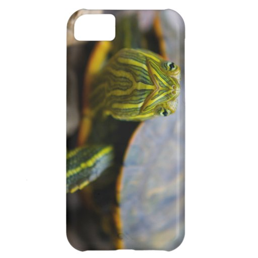 Red-eared Slider Turtle Head-on View iPhone 5C Cases