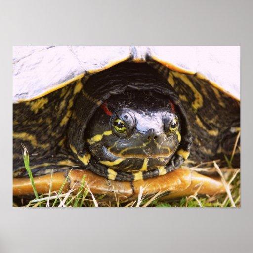 Red Eared Slider Turtle Head Print