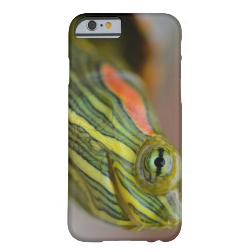 Red-eared Slider Turtle iPhone 6 case