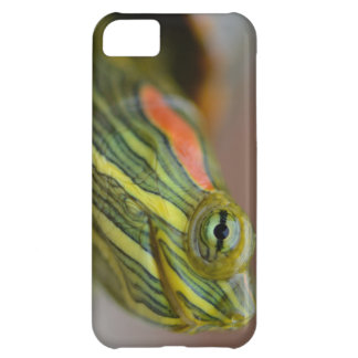 Red-eared Slider Turtle iPhone case