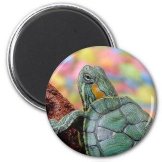 Red-eared slider turtle fridge magnet