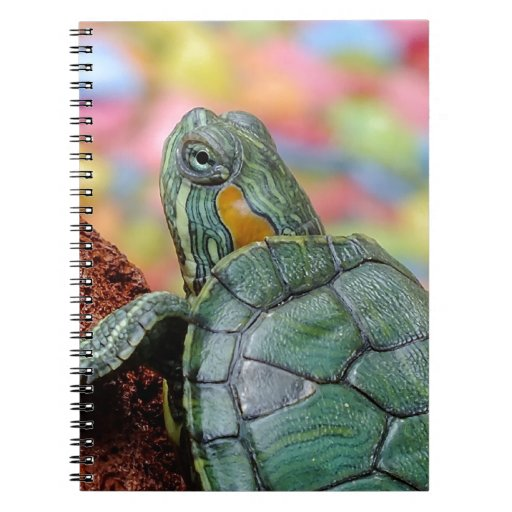 Red-eared slider turtle spiral notebook