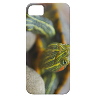 Red Eared Slider Turtle on River Rocks Barely There iPhone 5 Case