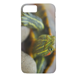 Red Eared Slider Turtle on River Rocks iPhone 7 Case
