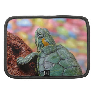 Red-eared slider turtle organizers
