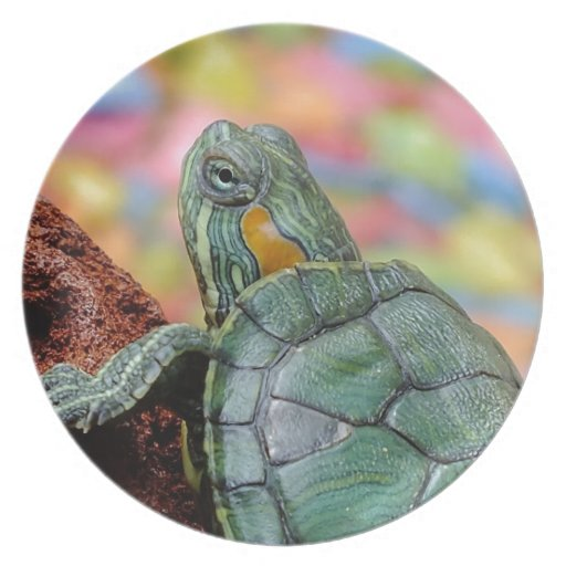 Red-eared slider turtle plates